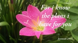 For i know the plans i have for you bible verse printed on nature photography
