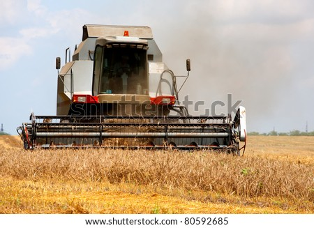 forage crop in the field mowing #80592685