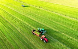 Forage harvester during grass cutting for silage in field. Harvesting biomass crop. Self-propelled Harvester for agriculture industry. Tractor work on silage season. Farm equipment and farming machine
