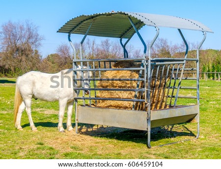 forage horse #606459104