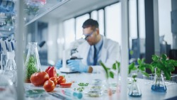 Foreground Focus on a Range of a Lab-Grown Cultured Vegetables: Peas, Tomatoes, Sweet Peppers, Plants. Medical Scientist Working on a Background in a Modern Food Science Laboratory.