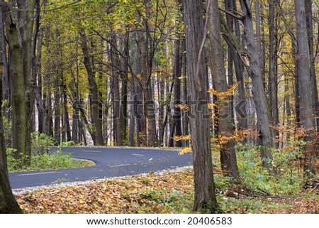 forest - Shutterstock ID 20406583