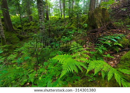 Forest #314301380