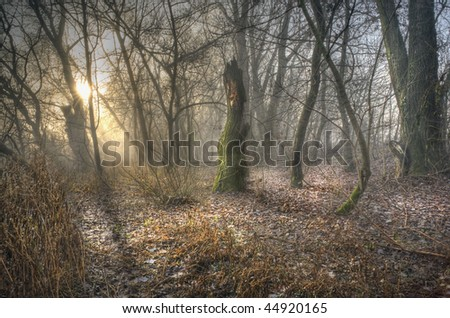 Forest 1. - stock photo