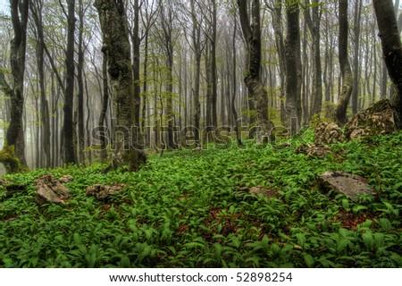 stock-photo-forest-52898254.jpg