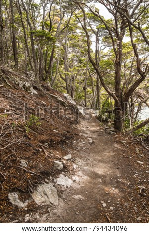 Shutterstock Forest and beagle channel in Coast Trail, Tierra del Fuego National Park, Ushuaia, Argentina