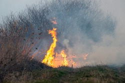 Forest and field fire. Strong smoke from a burning place. Dry grass burns, natural disaster