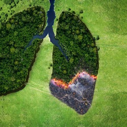 Forest and fire on a green field, top view. Trees in the form of lungs, the health of planet earth. Concept of environmental pollution. Lungs smokers creative idea
