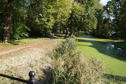 Forest and footpath along a ditch with duckweed in autumn at the Dutch village of Bergen. The Netherlands. October