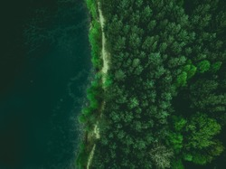 Forest and lake border, toned image from above.