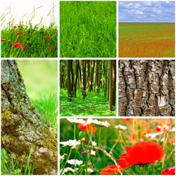 forest and meadow collection