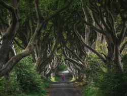 Forest and road in ireland. Travel and adventure. Landscape with alley trees. Dark Hedges.