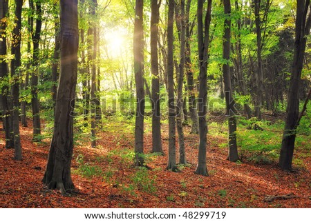 forest and sun beams at morning time
