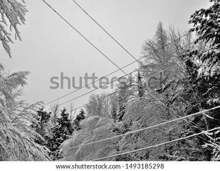 Forest and tree branches after heavy snowfall in the country #1493185298