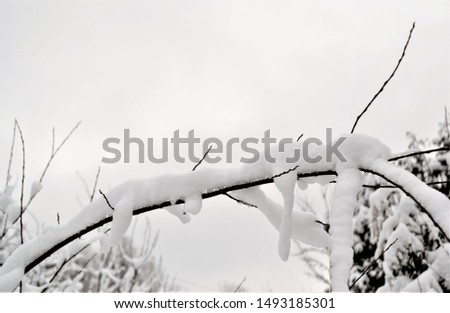 Forest and tree branches after heavy snowfall in the country #1493185301