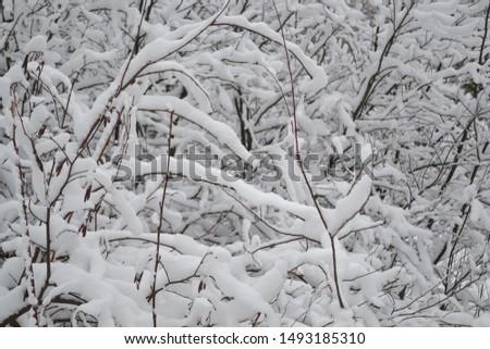 Forest and tree branches after heavy snowfall in the country #1493185310