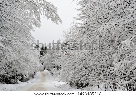 Forest and tree branches after heavy snowfall in the country #1493185316