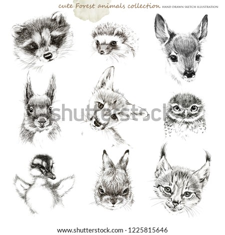 forest animals cub hand drawing sketch collection