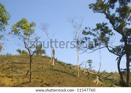"""Forest are usually destroyed in the Philippines to provide an area for planting.  After a few planting seasons and the soil nutrients had been depleted, """"kaingeros"""" leave the land."""