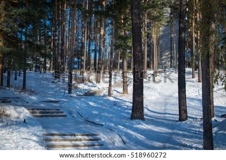 Forest area on Vostochnaya street in Zheleznogorsk city