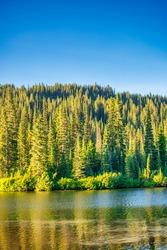 Forest around Mount Rainier in summer season.