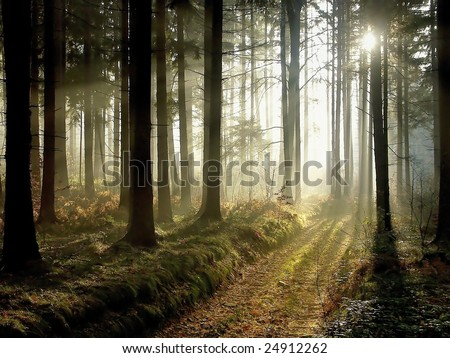 Conceptos Bàsicos de Photoshop Stock-photo-forest-at-dusk-this-image-in-better-quality-and-vibrant-colors-http-www-shutterstock-com-pic-24912262