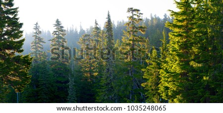 Forest at Mount Rainier National Park at sunrise, Washington State, USA #1035248065