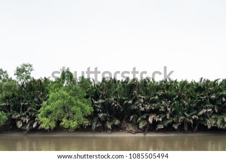 Forest at the river estuary with white sky on the background #1085505494