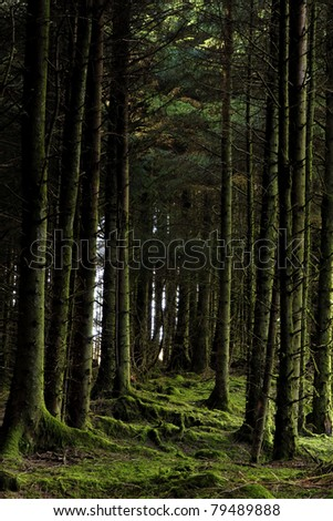 Forest at Wstern Ireland