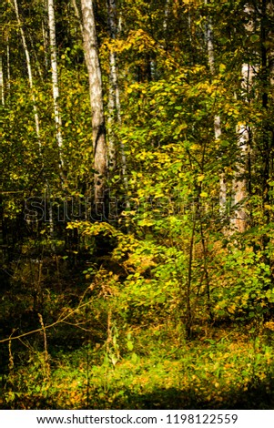 forest. autumn. russia #1198122559