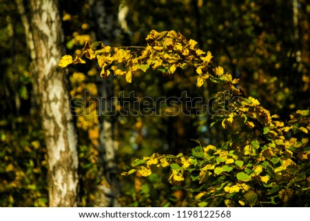 forest. autumn. russia #1198122568