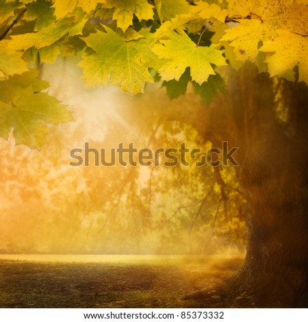 Forest background. Autumn design background with colorful green and yellow leaves falling from the tree
