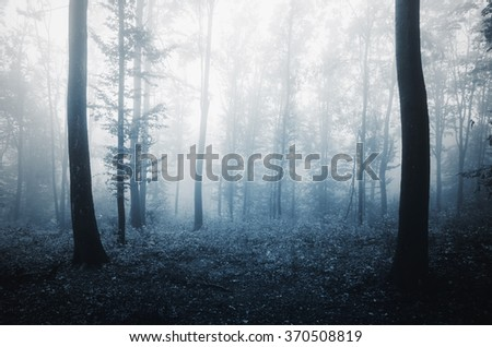 forest background in evening light #370508819