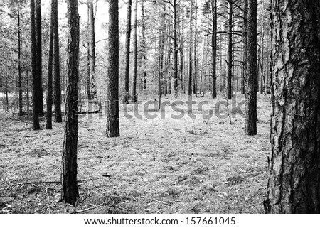 Forest background or Trees in the forest