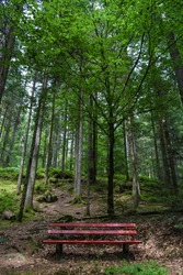 Forest Bank Bench Trees Green Deciduous Forest relax nature