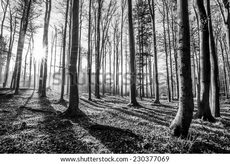 forest - black and white photography