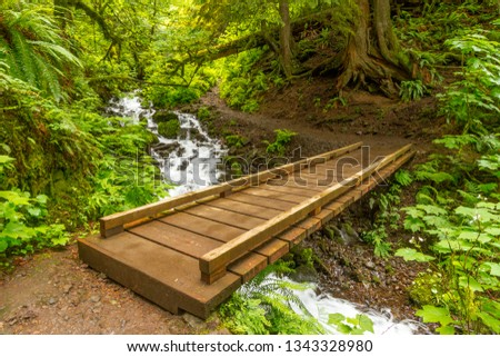 Forest Bridge - A trail traverses a creek deep in the forest. Columbia River Gorge, Oregon, USA