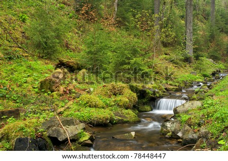 Forest brook running over mossy rocks