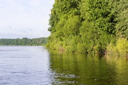 Forest by the river. Nature on the banks of the Volkhov River.
