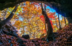 Forest cave in autumn scene. Autumn forest cave entrance. Cave in autumn forest. Cave entrance in autumn forest