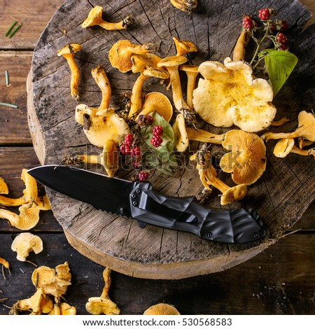 Forest Chanterelle mushrooms with wild raspberries and turist knife on wood stump over old  wooden background. Top view. Square image #530568583
