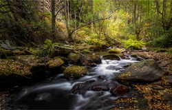 Forest cold creek water flow. Autumn forest cold creek. Cold creek water in autumn forest. Autumn forest creek view