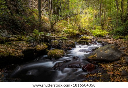 Photo of  Forest cold creek water flow. Autumn forest cold creek. Cold creek water in autumn forest. Autumn forest creek view