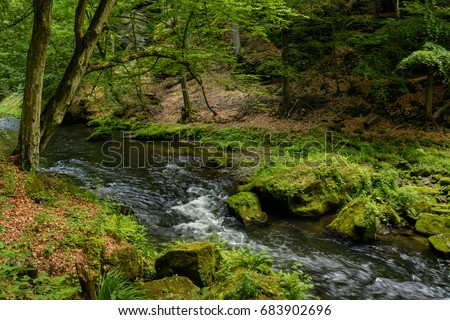 Forest creek, Bohemian Switzerland National Park, Czech Republic