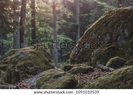 Forest details, rock and woods.