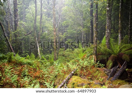 Forest details with thick undergrowth, fog and mist passing through - stock photo
