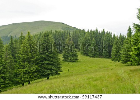 Forest edge seen from cleared alpine plateau