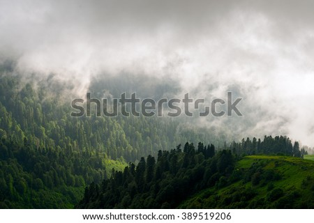Forest. Fantastic mountain forest landscape in clouds. Evergreen foggy forest background in the dark mountain view. Misty and cloudy mountain forest.  Mountain forest in haze.