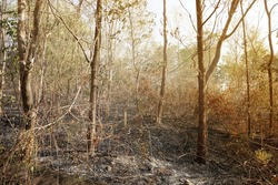 Forest Fire Aftermath, Forest firepower destroying. Environmental problems that occur during the dry season in Thailand. Image contain certain grain or noise and soft focus.