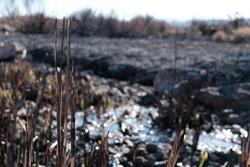 Forest Fire Aftermath. Wetlands Park Fire Aftermath.